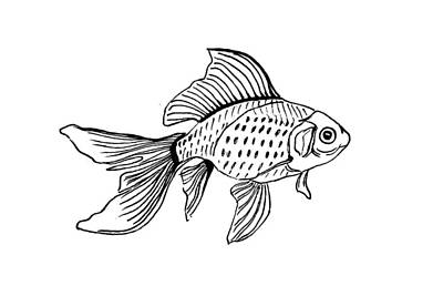 Drawing - Graphic Fish by Masha Batkova