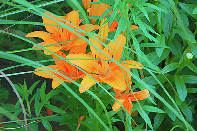 Photograph - Graphic Orange Tiger Lilies by Aimee L Maher Photography and Art Visit ALMGallerydotcom