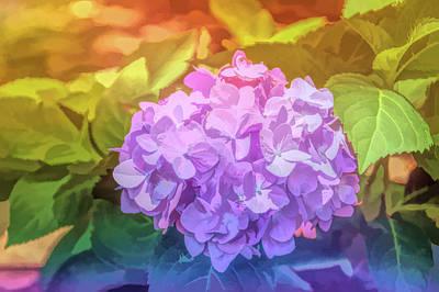 Graphic Rainbow Hydrangea Art Print