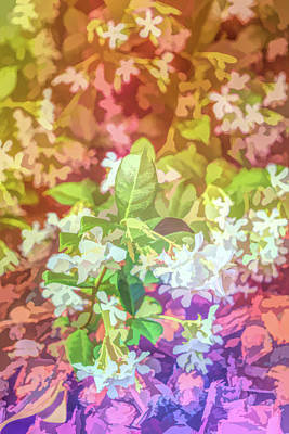 Photograph - Graphic Rainbow Jasmine In Bloom by Aimee L Maher Photography and Art Visit ALMGallerydotcom