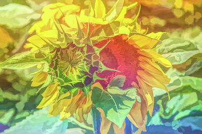 Photograph - Graphic Rainbow Joyous Sunflower by Aimee L Maher Photography and Art Visit ALMGallerydotcom