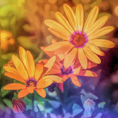 Photograph - Graphic Rainbow Orange Daisy by Aimee L Maher Photography and Art Visit ALMGallerydotcom