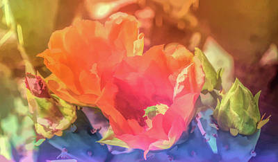 Photograph - Graphic Rainbow Orange Prickly Pear Blossoms by Aimee L Maher Photography and Art Visit ALMGallerydotcom