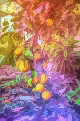 Photograph - Graphic Rainbow Orange Tree by Aimee L Maher Photography and Art Visit ALMGallerydotcom