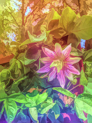 Photograph - Graphic Rainbow Passion Flower 3 by Aimee L Maher Photography and Art Visit ALMGallerydotcom