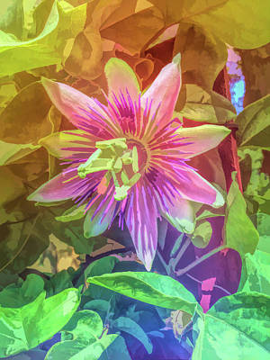Photograph - Graphic Rainbow Passion Flower 4 by Aimee L Maher Photography and Art Visit ALMGallerydotcom