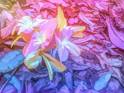 Photograph - Graphic Rainbow Pastel Petals by Aimee L Maher Photography and Art Visit ALMGallerydotcom