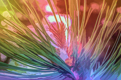 Photograph - Graphic Rainbow Pine Needles by Aimee L Maher ALM GALLERY