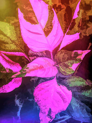 Photograph - Graphic Rainbow Pink And Green Leaves by Aimee L Maher Photography and Art Visit ALMGallerydotcom