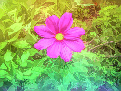 Photograph - Graphic Rainbow Pink Cosmos by Aimee L Maher Photography and Art Visit ALMGallerydotcom