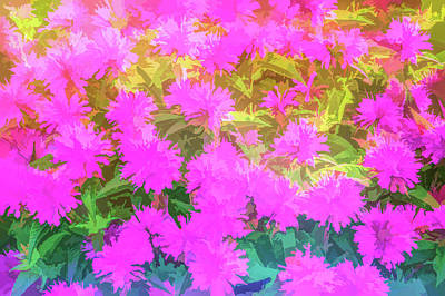 Photograph - Graphic Rainbow Pink Garden Flowers by Aimee L Maher Photography and Art Visit ALMGallerydotcom
