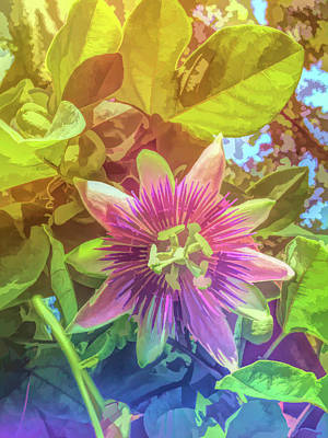 Photograph - Graphic Rainbow Purple Passion Flower 1 by Aimee L Maher Photography and Art Visit ALMGallerydotcom