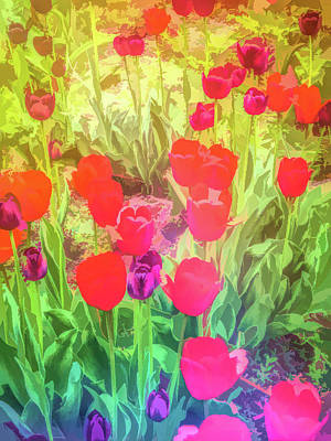 Photograph - Graphic Rainbow Red And Purple Tulips  by Aimee L Maher Photography and Art Visit ALMGallerydotcom