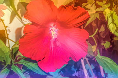 Photograph - Graphic Rainbow Red Hibiscus by Aimee L Maher Photography and Art Visit ALMGallerydotcom