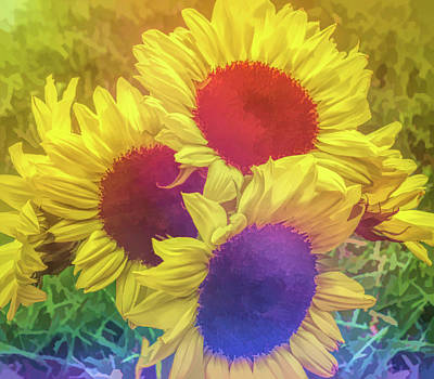 Photograph - Graphic Rainbow Sunflower Bouquet by Aimee L Maher ALM GALLERY