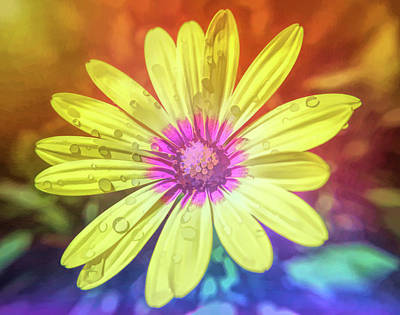 Photograph - Graphic Rainbow Yellow Daisy by Aimee L Maher Photography and Art Visit ALMGallerydotcom