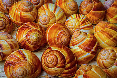 Photograph - Graphic Snail Shells by Garry Gay