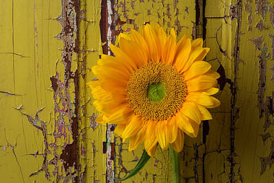 Chip Photograph - Graphic Sunflower by Garry Gay