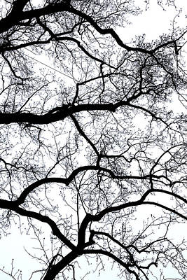 Photograph - Grasping Limbs by Cate Franklyn