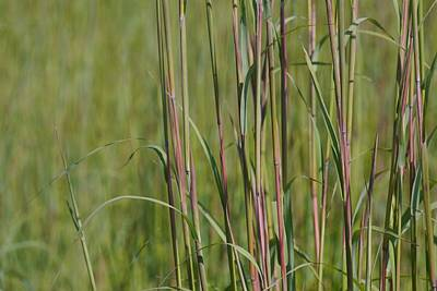 Photograph - Grass #2 by Photography by Tiwago