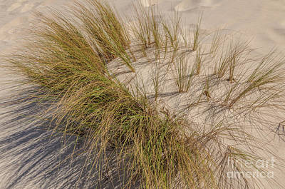 Photograph - Grass 2 by Werner Padarin