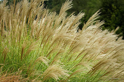 Photograph - Grass 8 The Grass Collection Interior Design Art by Reid Callaway