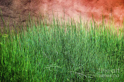 Photograph - Grass Against A Wall by Jon Burch Photography