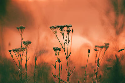 Grass And Plants In The Morning Mist Art Print