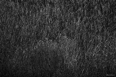 Photograph - Grass Black And White by Glenn Gemmell
