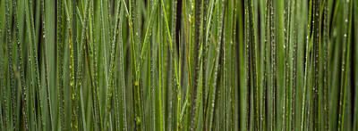 Still Life Royalty-Free and Rights-Managed Images - Grass Blades Panorama by Steve Gadomski