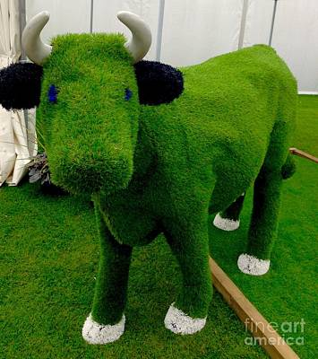 Photograph - Grass Bull by Joan-Violet Stretch