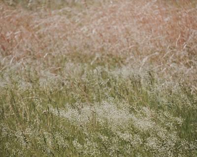 Photograph - Grass Cloud by Tim Good