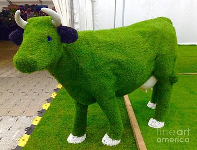 Photograph - Grass Cow by Joan-Violet Stretch