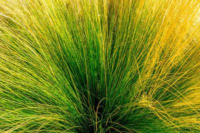 Photograph - Grass by Derek Dean