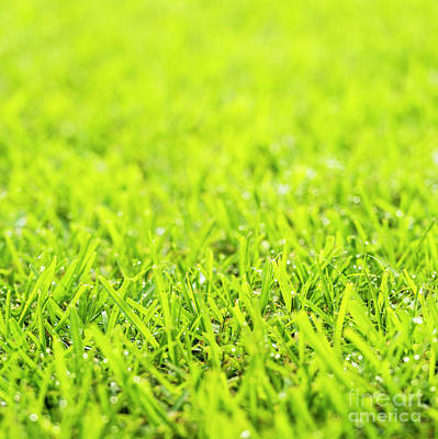 Royalty-Free and Rights-Managed Images - Grass Dew Drops by Tim Hester