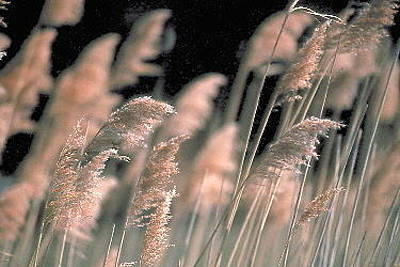 Photograph - Grass by Douglas Pike