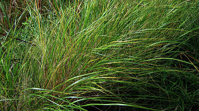 Photograph - Grass by Emma Frost