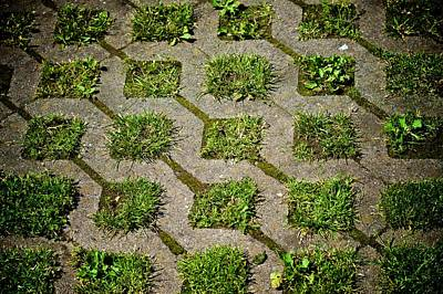 Photograph - Grass Grows Green by Eric Tressler