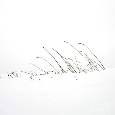 Grass In A Snow Field Art Print by Bernard Jaubert