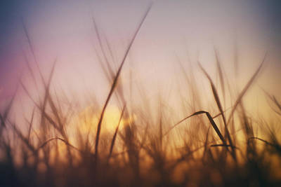Photograph - Grass In A Windy Field by Fabrizio Troiani