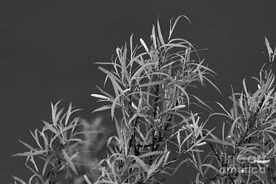 Texas Photograph - Grass In Greys 2 by Ashley M Conger