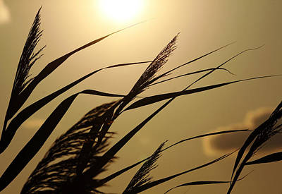 Photograph - Grass In Silhouette by Debbie Oppermann
