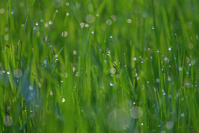 Photograph - Grass In Spring 2 by Kathy Adams Clark