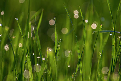 Photograph - Grass In Spring 5 by Kathy Adams Clark