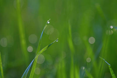 Photograph - Grass In Spring by Kathy Adams Clark