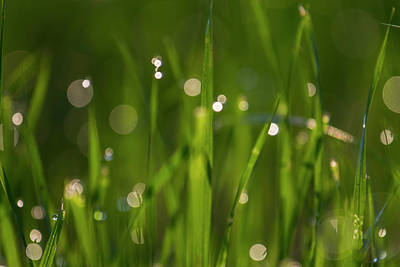 Photograph - Grass In Spring3 by Kathy Adams Clark