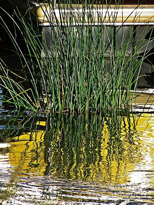 Photograph - Grass In The Marina    by Sarah Loft