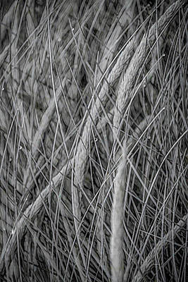 Digital Art - Grass Lines by Bill Posner