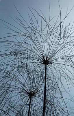 Photograph - Grass Mandala by Jocelyn Kahawai