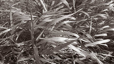 Photograph - Grass by Mark Alan Perry